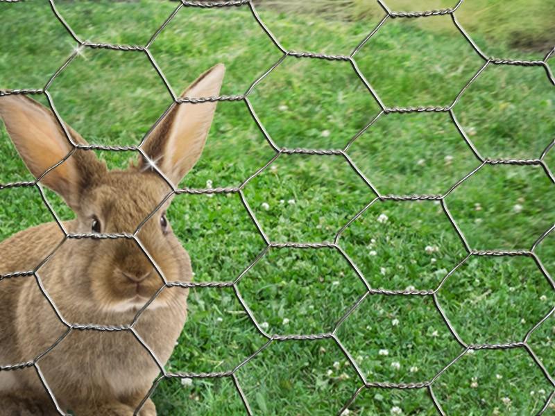 6-Eck-Geflecht Hase